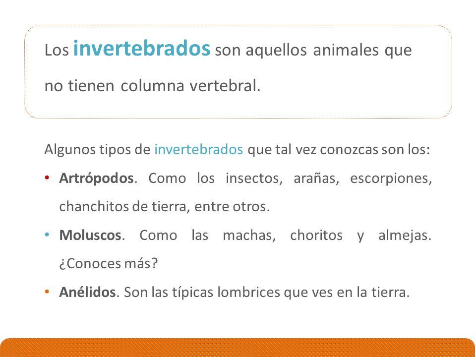 Los invertebrados son aquellos animales que no tienen columna vertebral.
