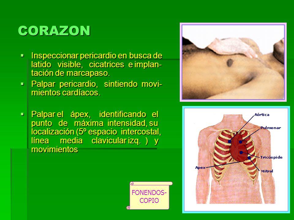 CORAZON Inspeccionar pericardio en busca de latido visible, cicatrices e implan-tación de marcapaso.