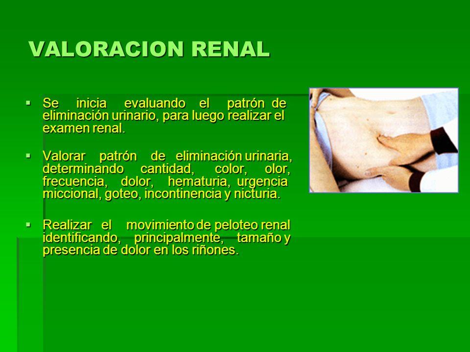 VALORACION RENALSe inicia evaluando el patrón de eliminación urinario, para luego realizar el examen renal.