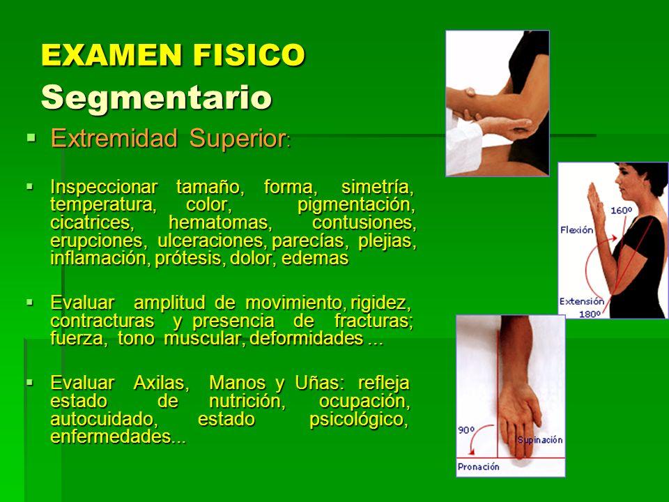 EXAMEN FISICO Segmentario