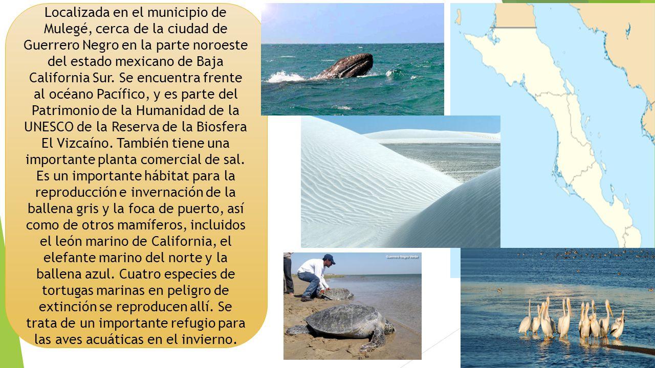 Localizada en el municipio de Mulegé, cerca de la ciudad de Guerrero Negro en la parte noroeste del estado mexicano de Baja California Sur.
