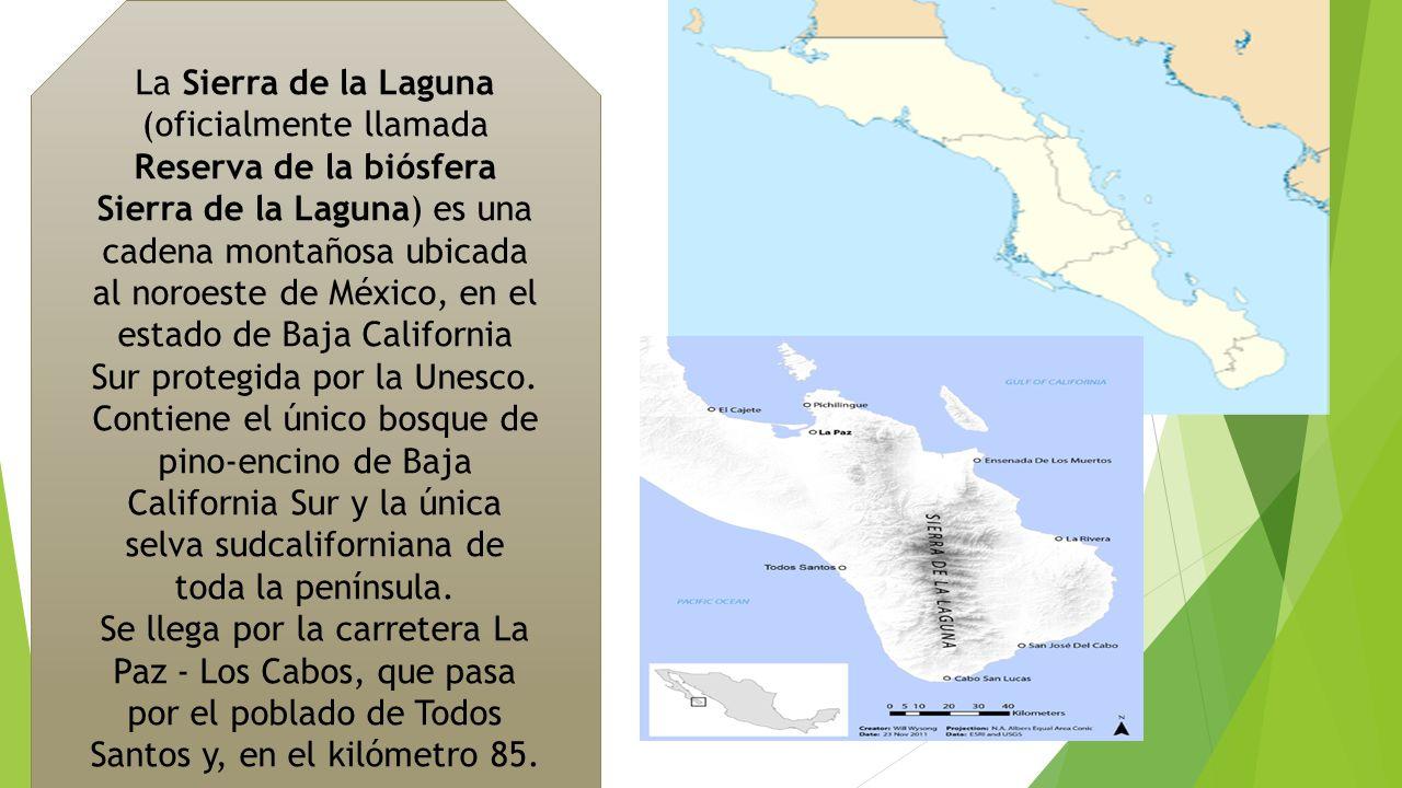 La Sierra de la Laguna (oficialmente llamada Reserva de la biósfera Sierra de la Laguna) es una cadena montañosa ubicada al noroeste de México, en el estado de Baja California Sur protegida por la Unesco. Contiene el único bosque de pino-encino de Baja California Sur y la única selva sudcaliforniana de toda la península.