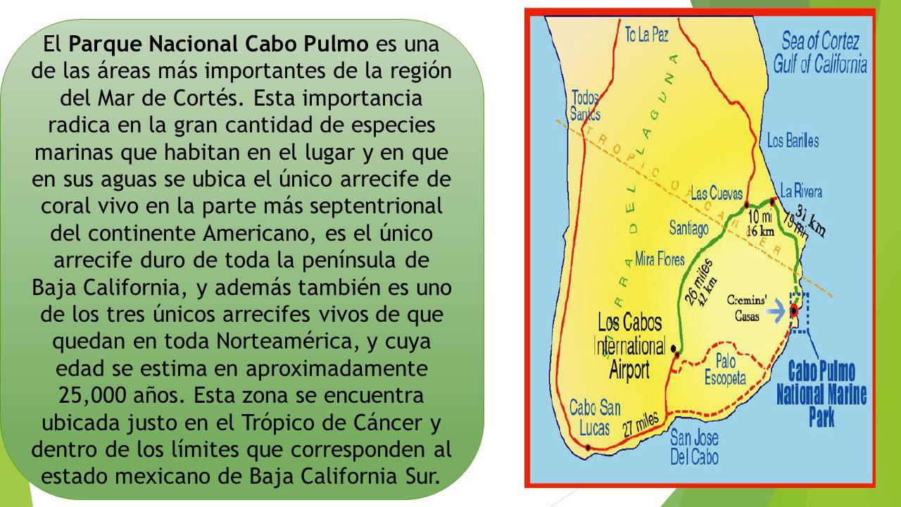 El Parque Nacional Cabo Pulmo es una de las áreas más importantes de la región del Mar de Cortés.