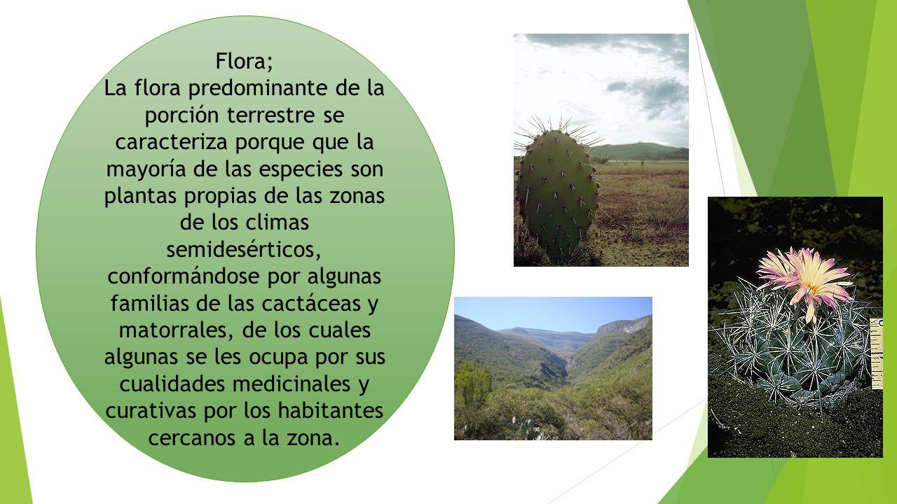 Flora;
