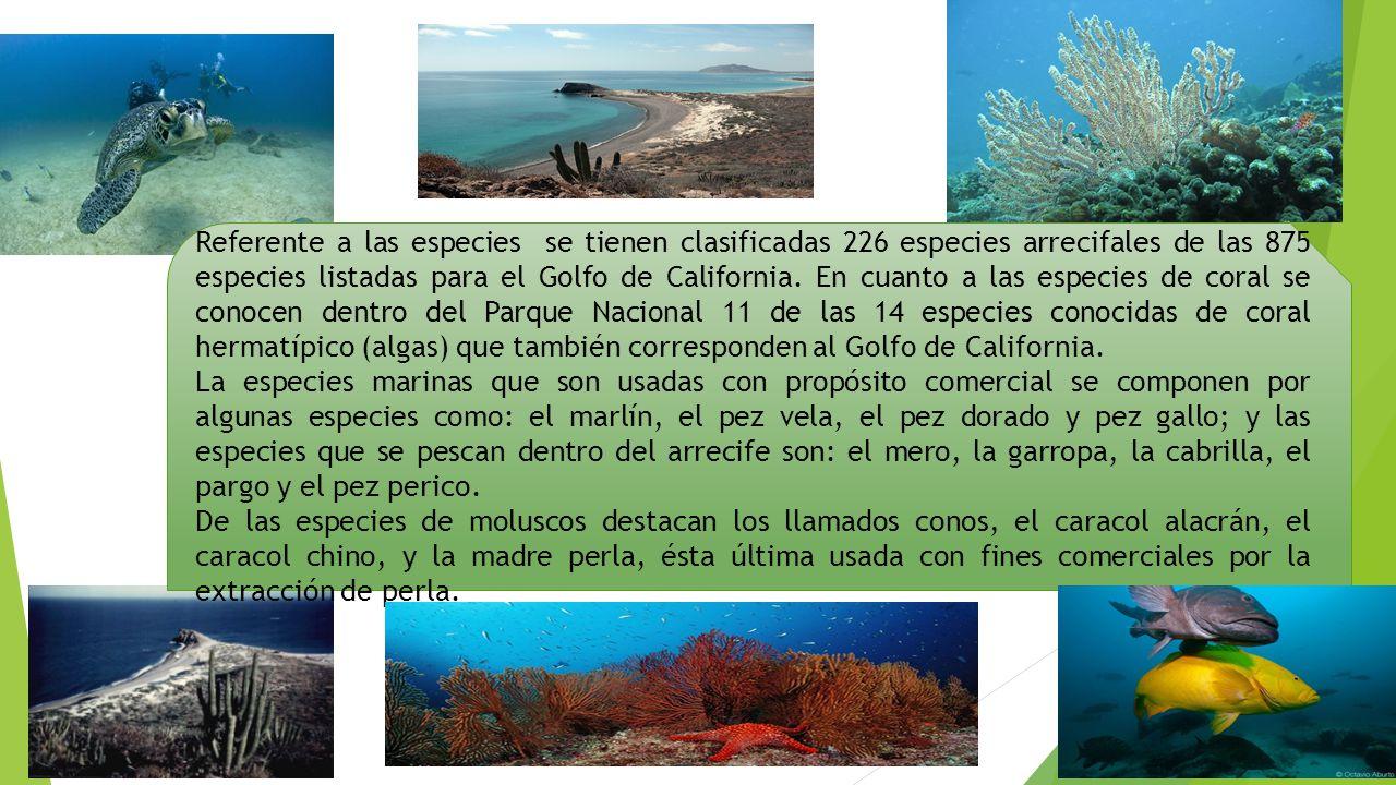Referente a las especies se tienen clasificadas 226 especies arrecifales de las 875 especies listadas para el Golfo de California. En cuanto a las especies de coral se conocen dentro del Parque Nacional 11 de las 14 especies conocidas de coral hermatípico (algas) que también corresponden al Golfo de California.