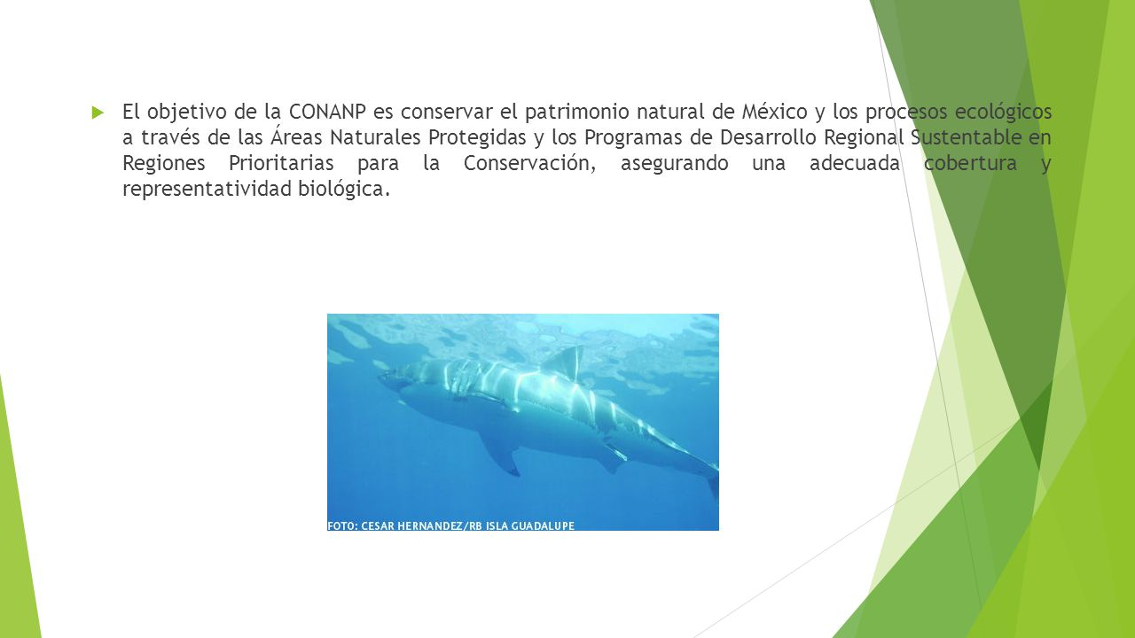 El objetivo de la CONANP es conservar el patrimonio natural de México y los procesos ecológicos a través de las Áreas Naturales Protegidas y los Programas de Desarrollo Regional Sustentable en Regiones Prioritarias para la Conservación, asegurando una adecuada cobertura y representatividad biológica.