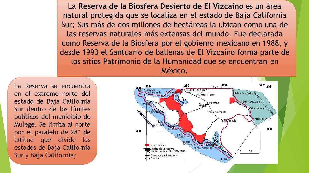 La Reserva de la Biosfera Desierto de El Vizcaíno es un área natural protegida que se localiza en el estado de Baja California Sur; Sus más de dos millones de hectáreas la ubican como una de las reservas naturales más extensas del mundo. Fue declarada como Reserva de la Biosfera por el gobierno mexicano en 1988, y desde 1993 el Santuario de ballenas de El Vizcaíno forma parte de los sitios Patrimonio de la Humanidad que se encuentran en México.