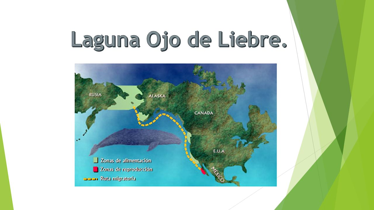 Laguna Ojo de Liebre.