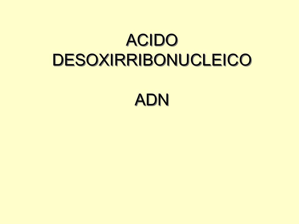 ACIDO DESOXIRRIBONUCLEICO ADN