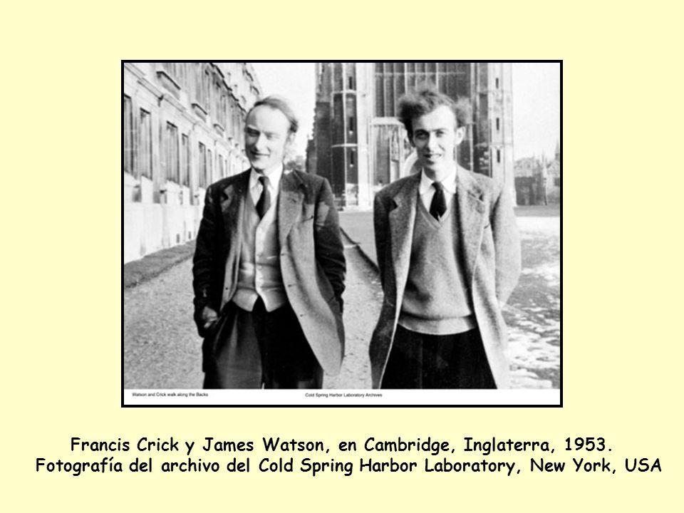 Francis Crick y James Watson, en Cambridge, Inglaterra, 1953.