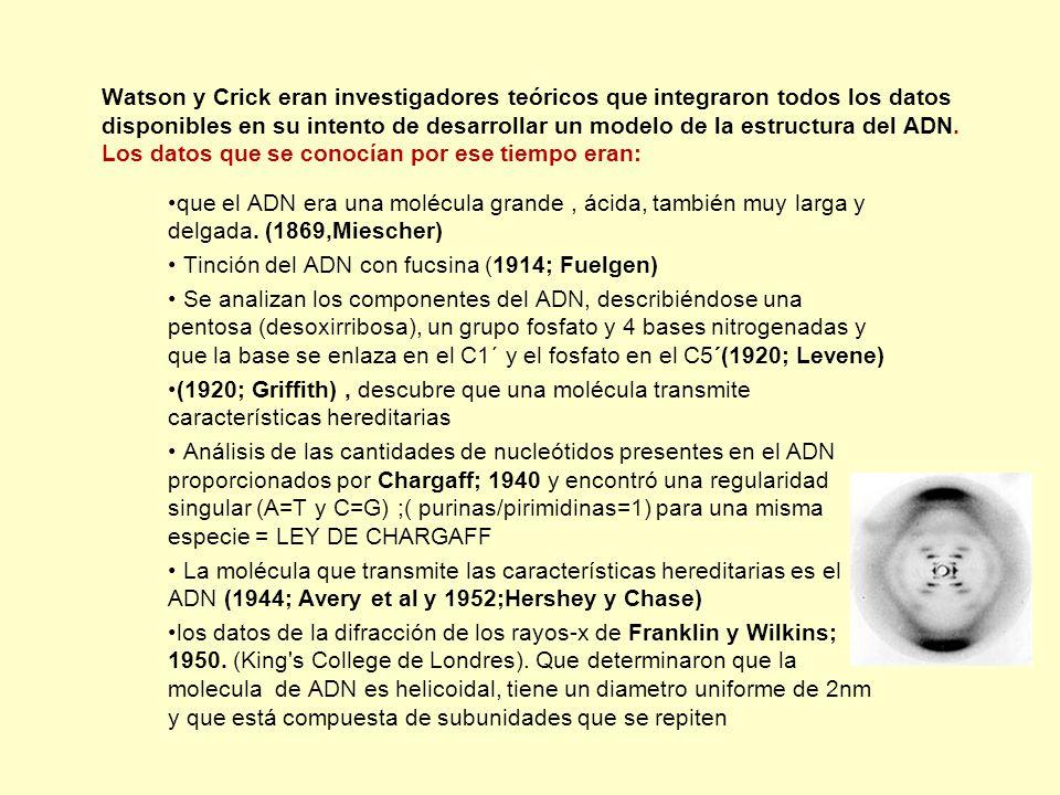Watson y Crick eran investigadores teóricos que integraron todos los datos disponibles en su intento de desarrollar un modelo de la estructura del ADN. Los datos que se conocían por ese tiempo eran: