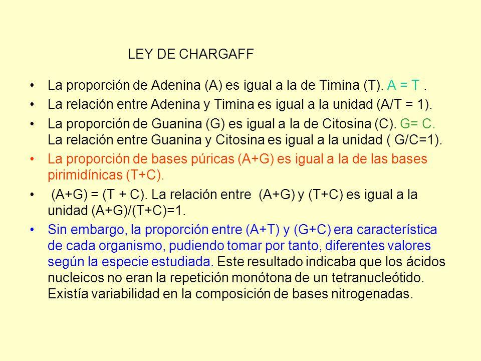 LEY DE CHARGAFF La proporción de Adenina (A) es igual a la de Timina (T). A = T . La relación entre Adenina y Timina es igual a la unidad (A/T = 1).