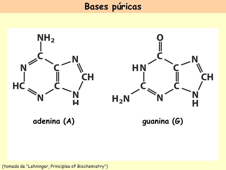 (tomado de Lehninger, Principles of Biochemistry )