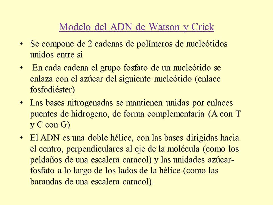 Modelo del ADN de Watson y Crick