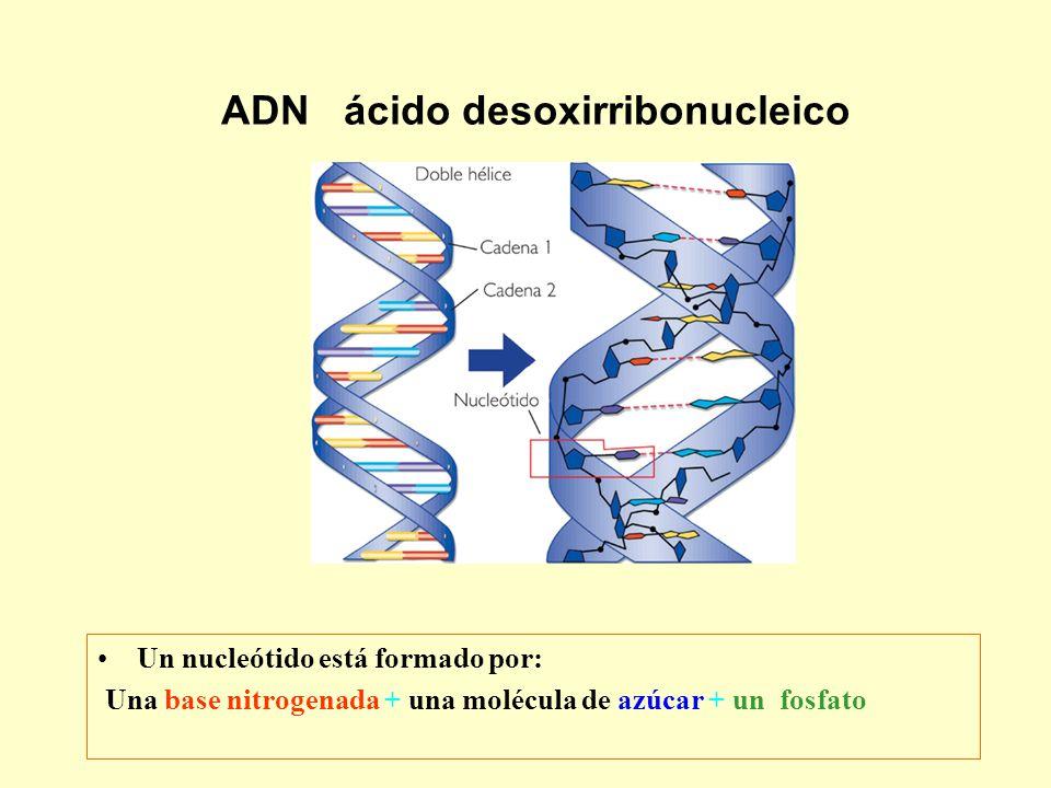 Un nucleótido está formado por: