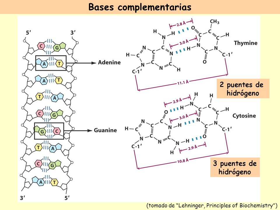 Bases complementarias