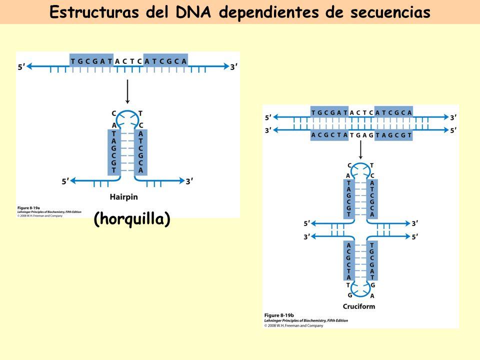 Estructuras del DNA dependientes de secuencias