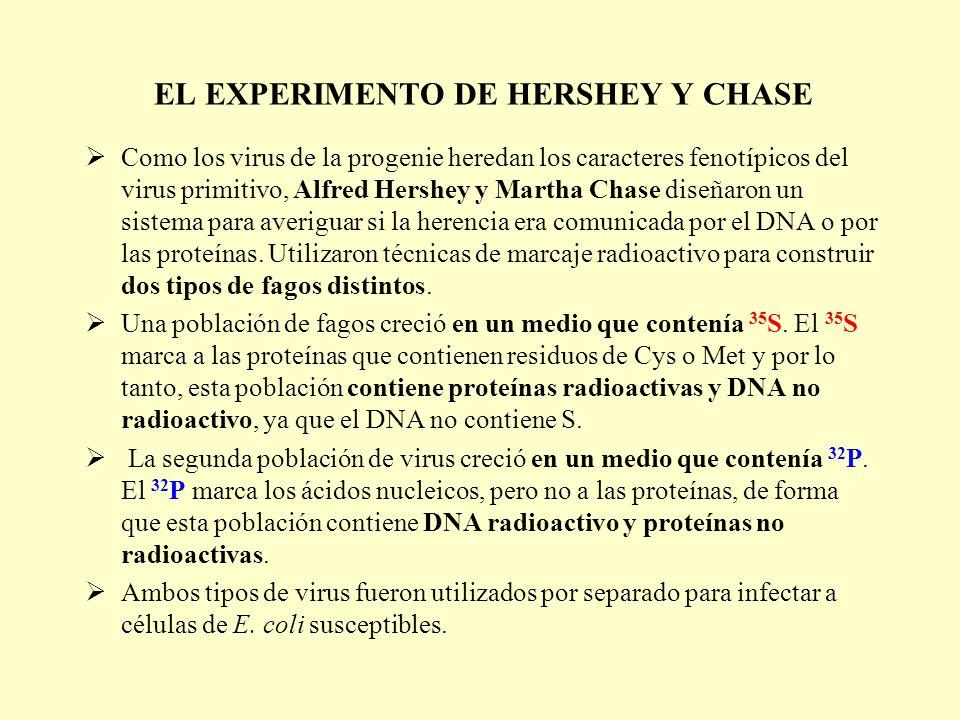 EL EXPERIMENTO DE HERSHEY Y CHASE