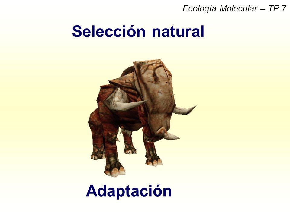 Selección natural Adaptación