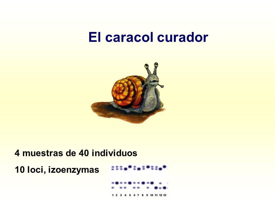 El caracol curador 4 muestras de 40 individuos 10 loci, izoenzymas
