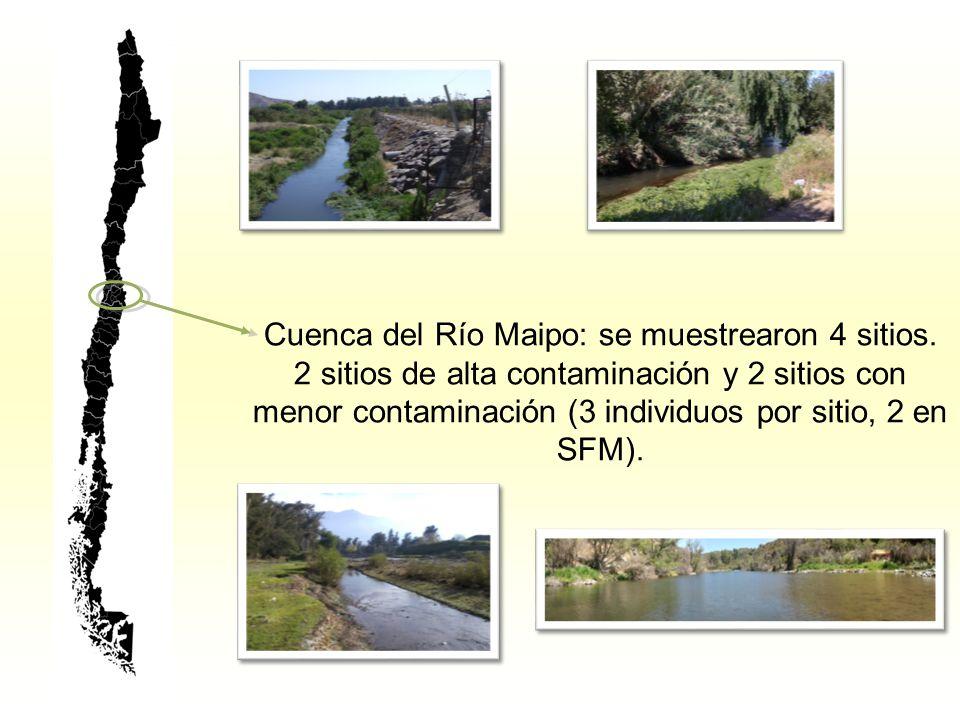 Cuenca del Río Maipo: se muestrearon 4 sitios.