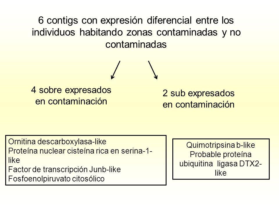 6 contigs con expresión diferencial entre los individuos habitando zonas contaminadas y no contaminadas