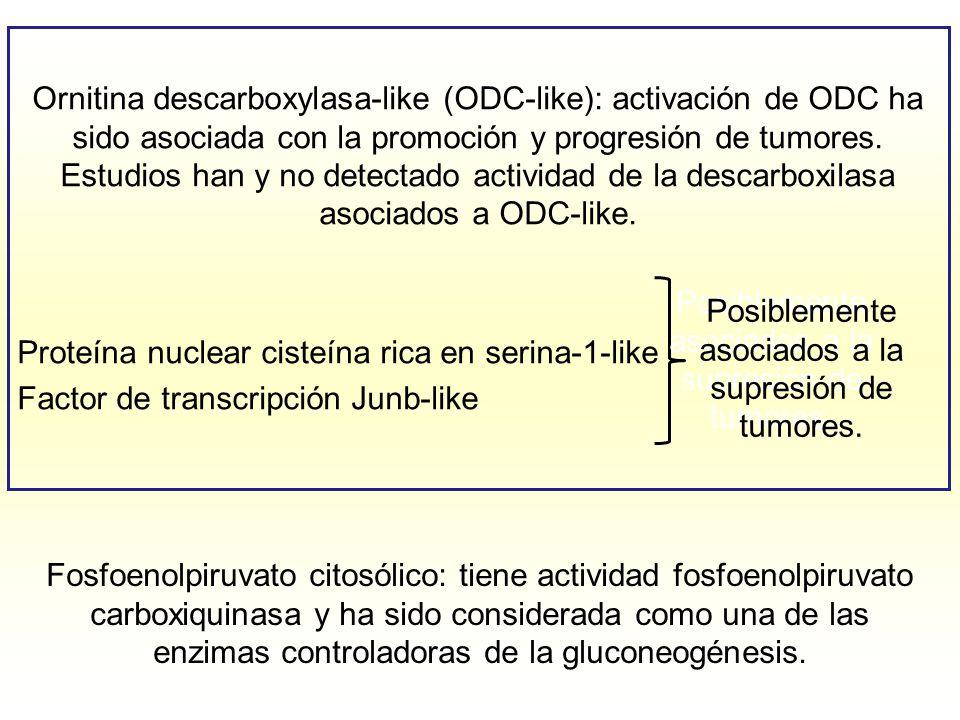 Posiblemente asociados a la supresión de tumores.