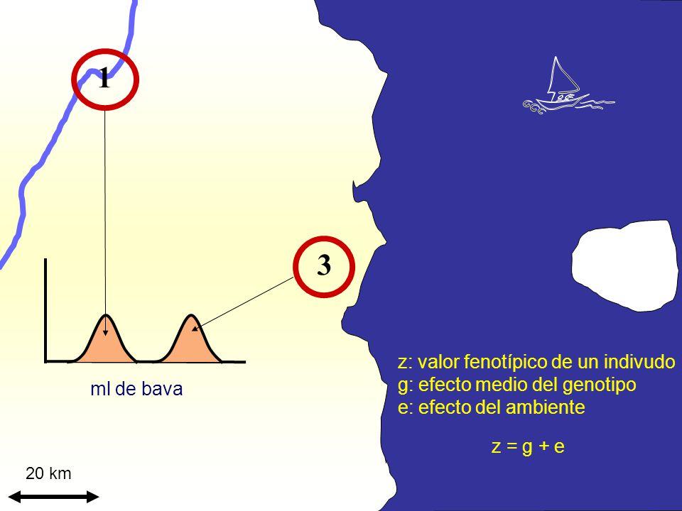 1 3 z: valor fenotípico de un indivudo g: efecto medio del genotipo