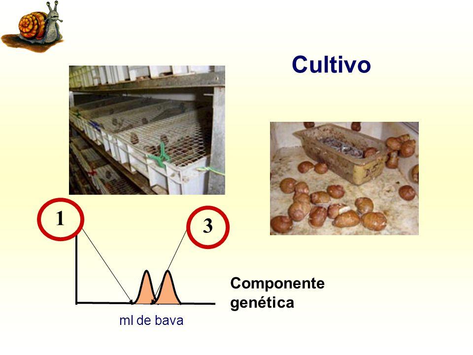 Cultivo 1 3 Componente genética ml de bava