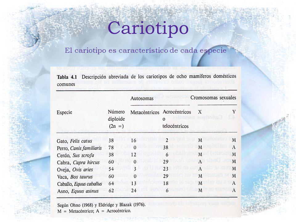 Cariotipo El cariotipo es característico de cada especie