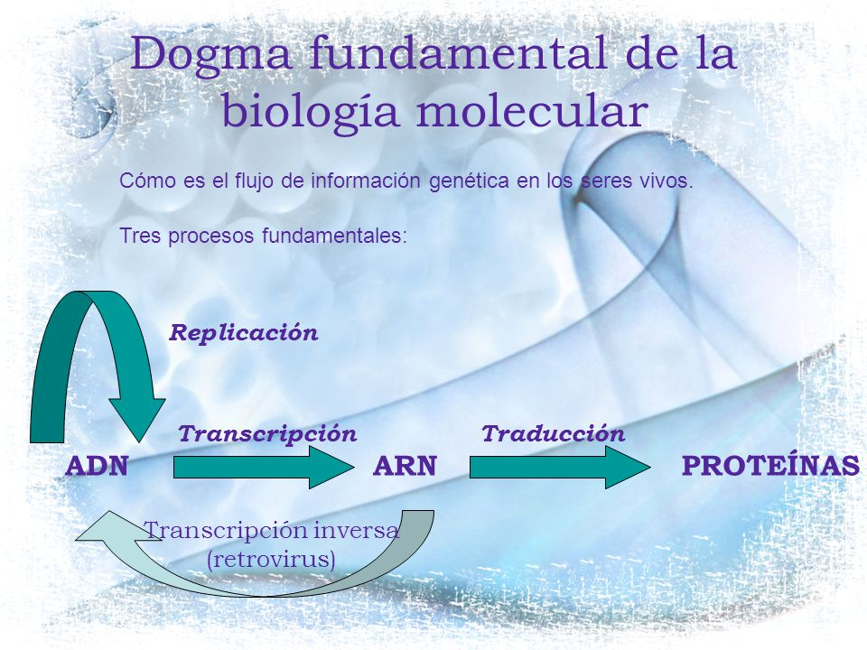 Dogma fundamental de la biología molecular