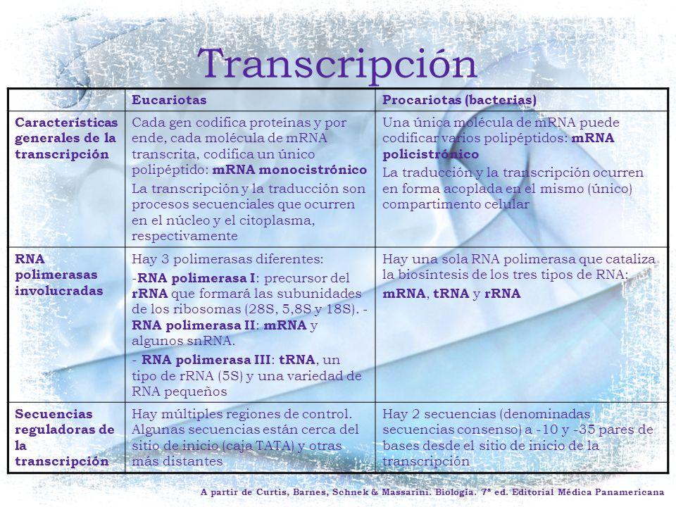 Transcripción Eucariotas Procariotas (bacterias)