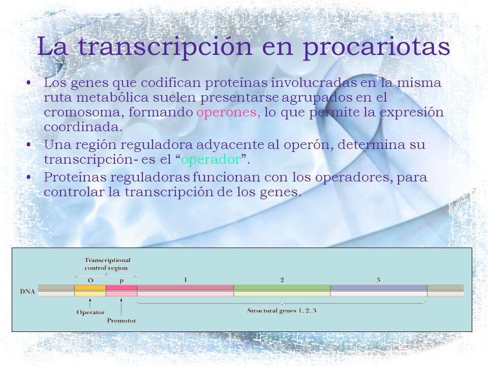 La transcripción en procariotas