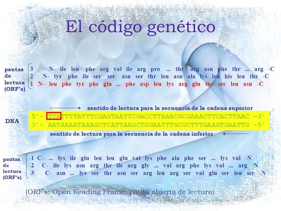 El código genético pautas de lectura. (ORF's)