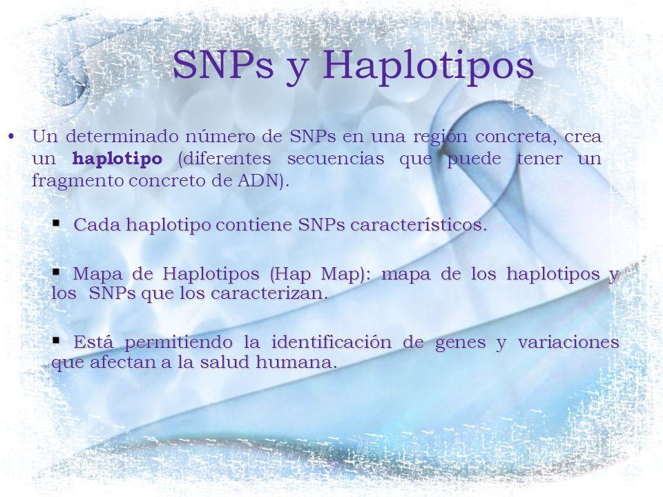 SNPs y Haplotipos