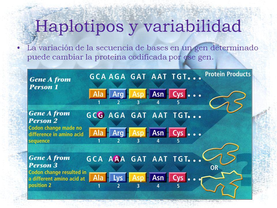 Haplotipos y variabilidad