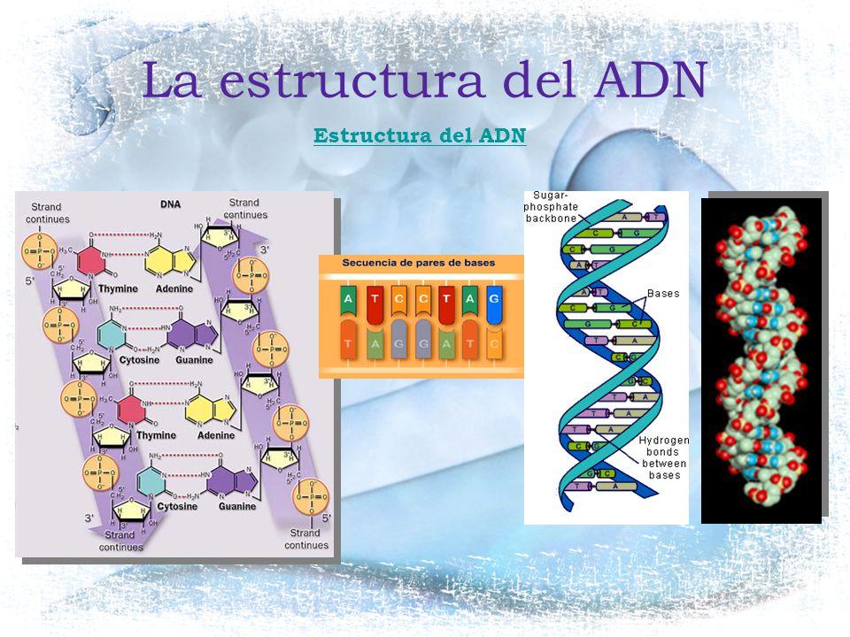 La estructura del ADN Estructura del ADN
