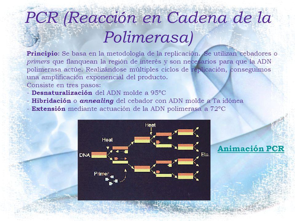 PCR (Reacción en Cadena de la Polimerasa)