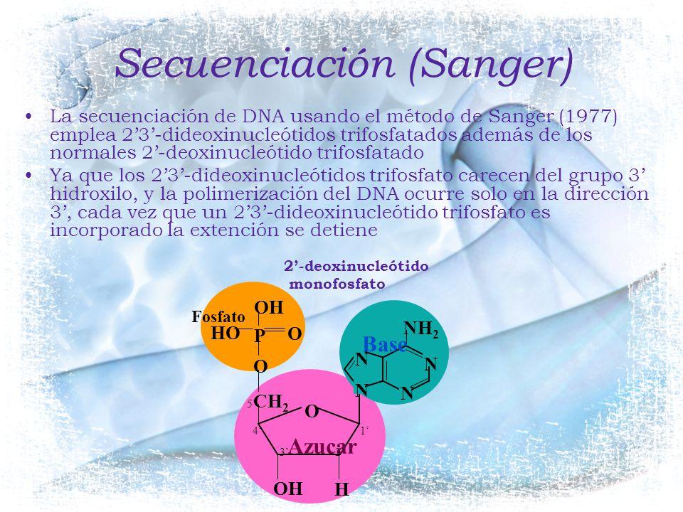 Secuenciación (Sanger)