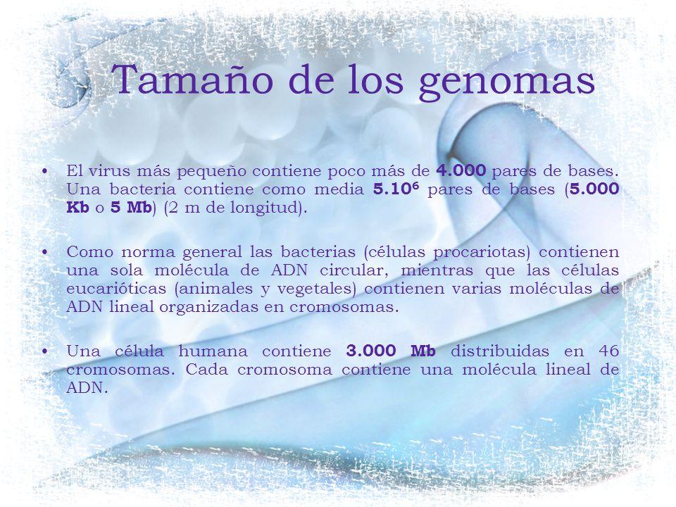 Tamaño de los genomas