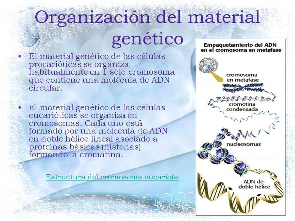 Organización del material genético