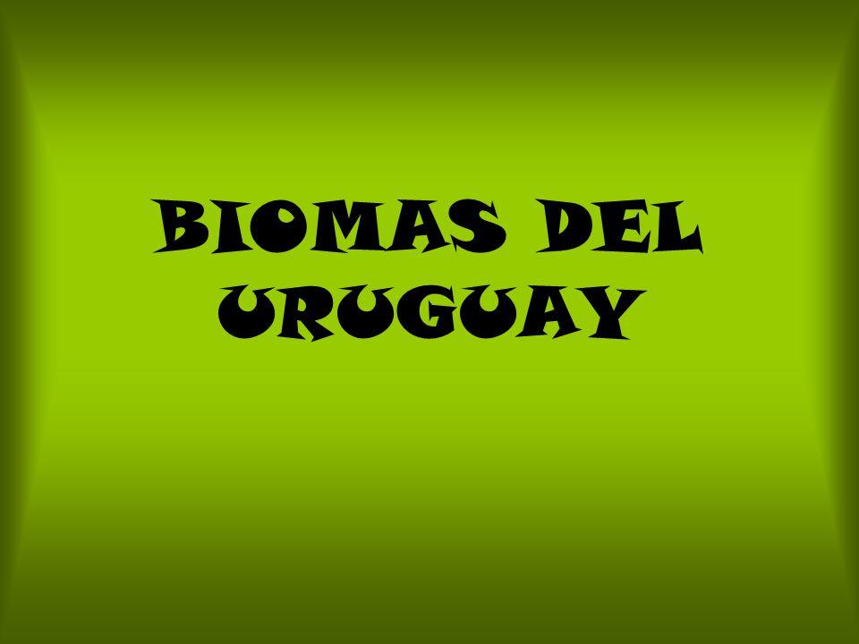 BIOMAS DEL URUGUAY