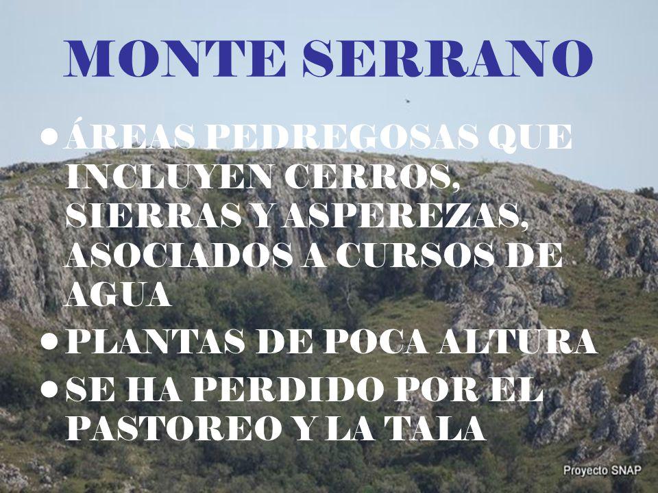 MONTE SERRANO ÁREAS PEDREGOSAS QUE INCLUYEN CERROS, SIERRAS Y ASPEREZAS, ASOCIADOS A CURSOS DE AGUA.