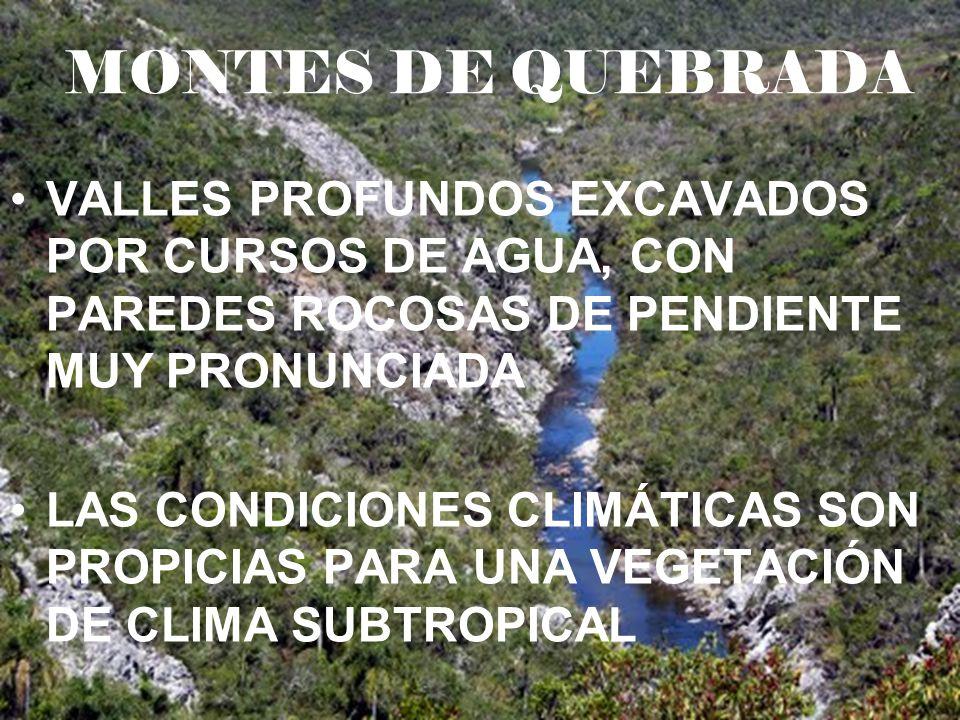 MONTES DE QUEBRADA VALLES PROFUNDOS EXCAVADOS POR CURSOS DE AGUA, CON PAREDES ROCOSAS DE PENDIENTE MUY PRONUNCIADA.