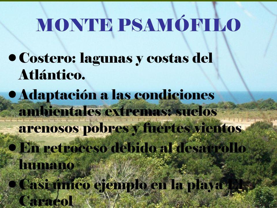 MONTE PSAMÓFILO Costero: lagunas y costas del Atlántico.