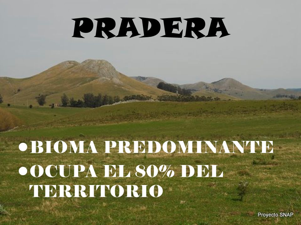 PRADERA BIOMA PREDOMINANTE OCUPA EL 80% DEL TERRITORIO