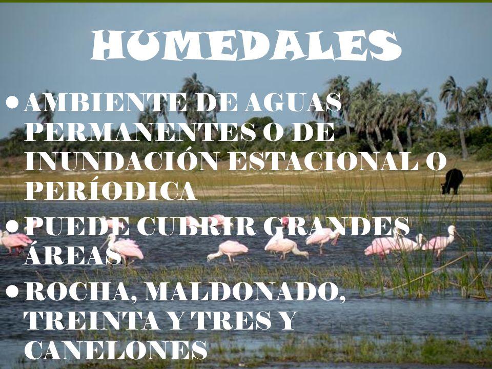 HUMEDALES AMBIENTE DE AGUAS PERMANENTES O DE INUNDACIÓN ESTACIONAL O PERÍODICA. PUEDE CUBRIR GRANDES ÁREAS.