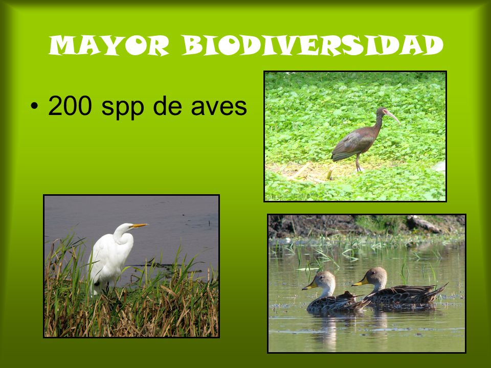 MAYOR BIODIVERSIDAD 200 spp de aves