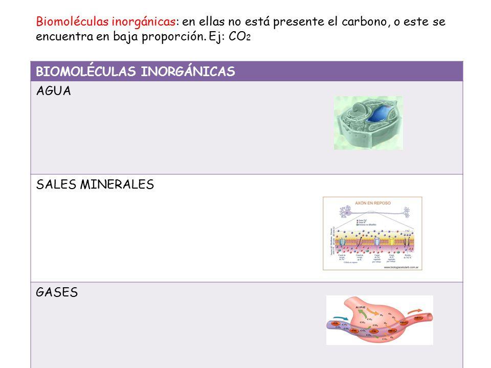 Biomoléculas inorgánicas: en ellas no está presente el carbono, o este se encuentra en baja proporción. Ej: CO2