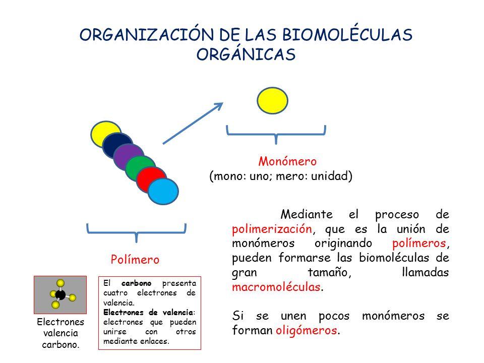 ORGANIZACIÓN DE LAS BIOMOLÉCULAS ORGÁNICAS